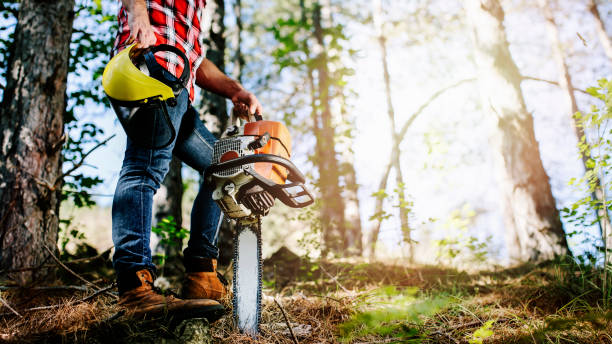 lumberjack - chainsaw stock photos and pictures