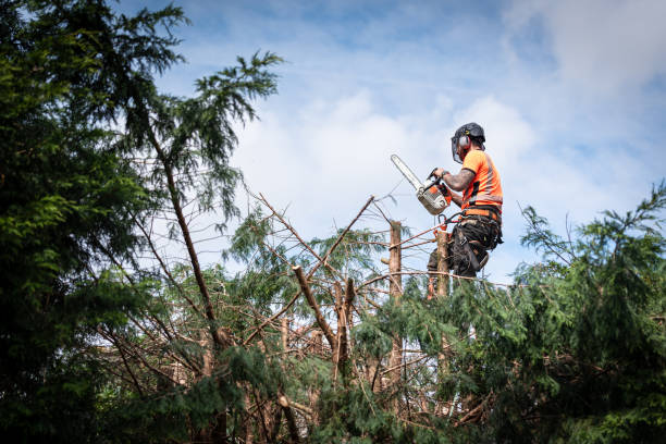Lumberjack Tree surgeon stock photo