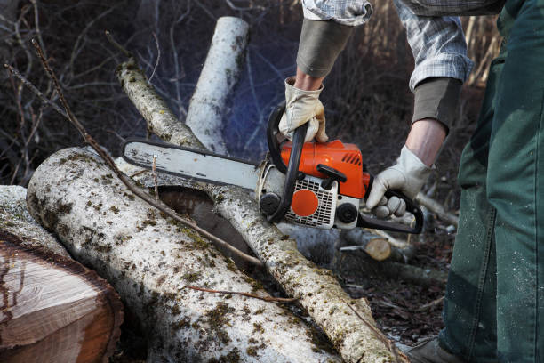 lumberjack using chainsaw cutting big tree during the autumn close up - chainsaw stock photos and pictures