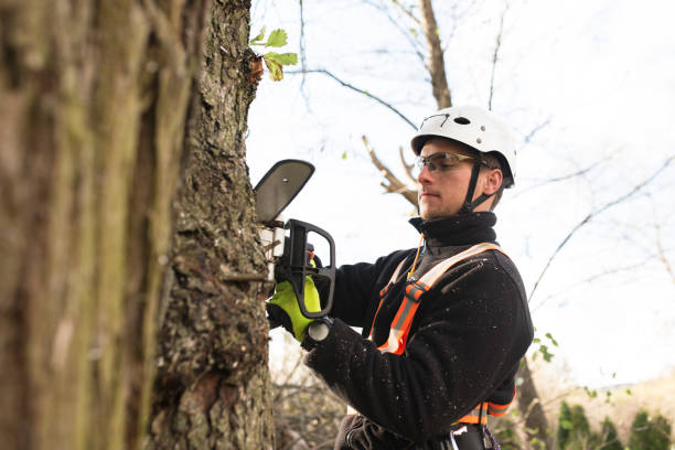 lumberjack with chainsaw and harness pruning a tree. - tree surgeon stock photos and pictures