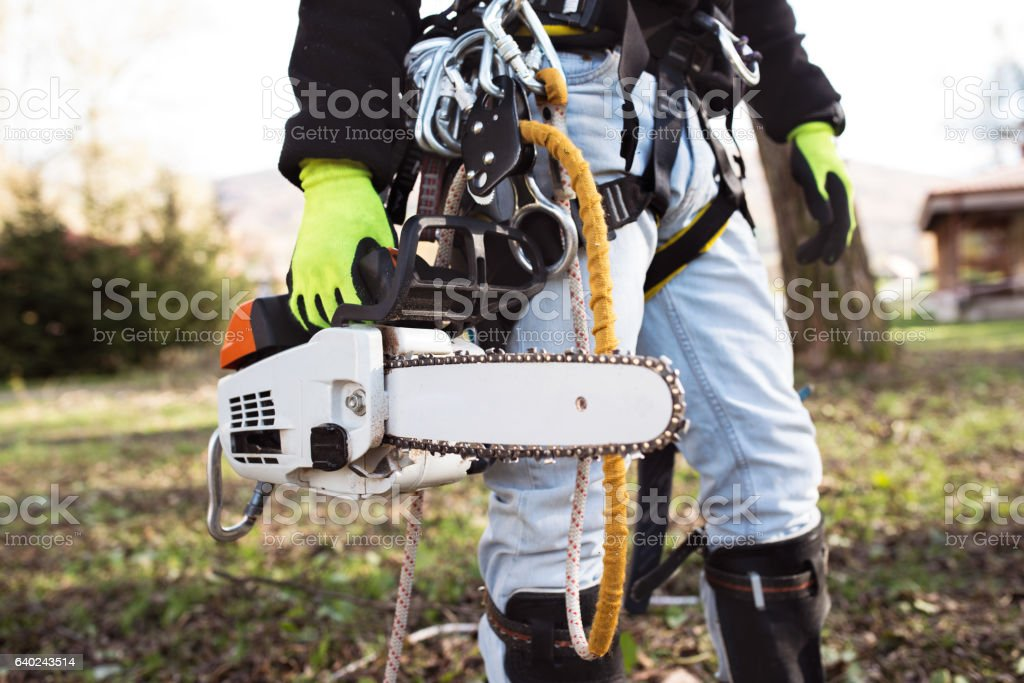 Lumberjack with harness and chainsaw prepared to prune a tree. stock photo