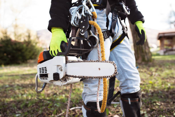 lumberjack with harness and chainsaw prepared to prune a tree. - tree surgeon stock photos and pictures