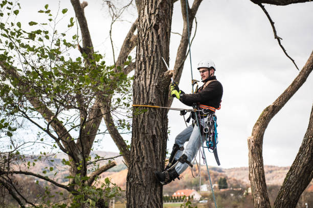 lumberjack with saw and harness pruning a tree. - tree surgeon stock photos and pictures