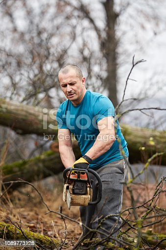 Busy lumberjack working on a big tree with chainsaw