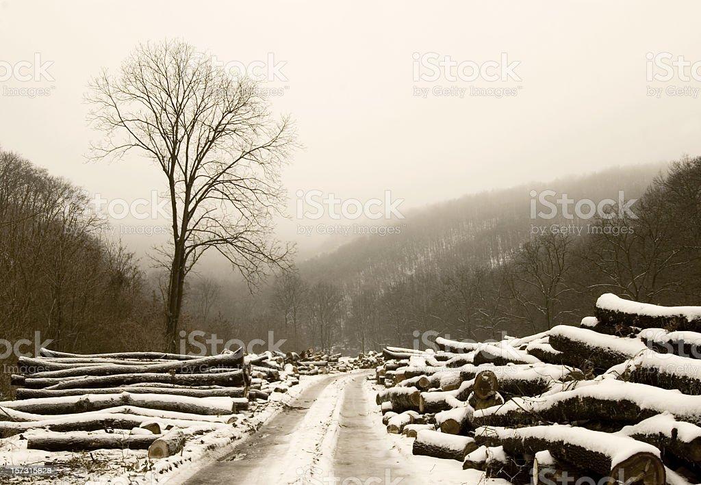 Lumberyard stock photo