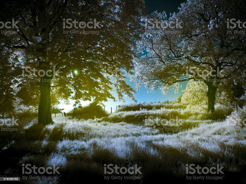 Luminous forest stock photo