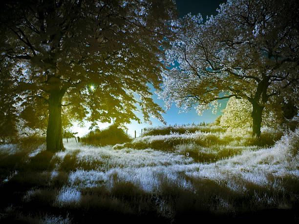 luminosa floresta - jardim do eden - fotografias e filmes do acervo