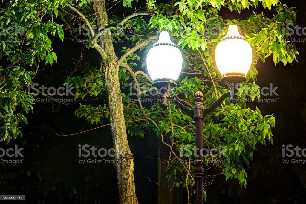Luminous street light on the background of tree foliage near the...
