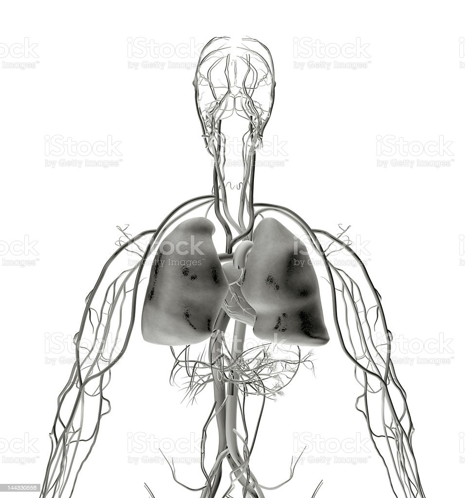 Lung X-ray royalty-free stock photo