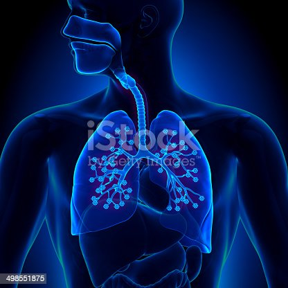 istock Lungs Anatomy - with detailed Alveoli 498551875