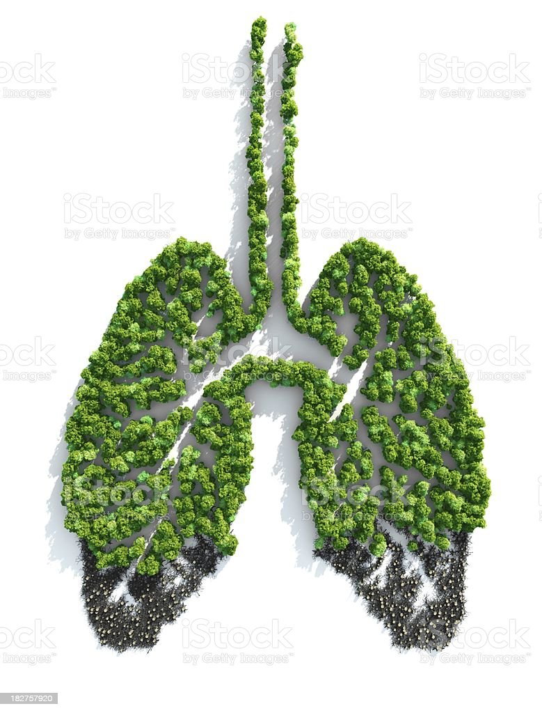 Lungs of the Planet stock photo