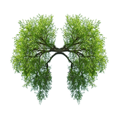 istock lungs 451094575