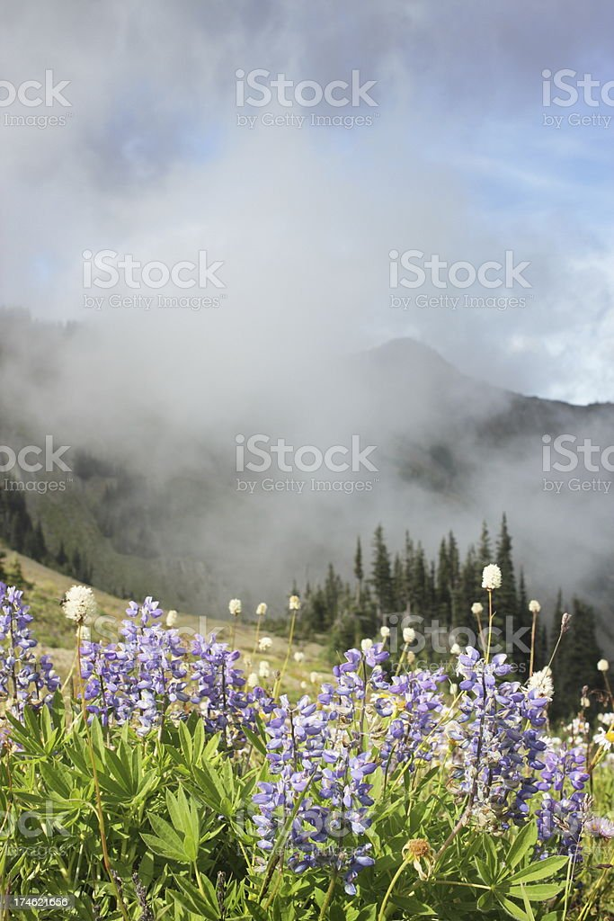 Lupine Wildflowers Mountain Meadow Mist stock photo