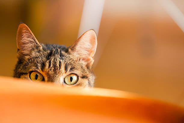 Lurking cat stock photo