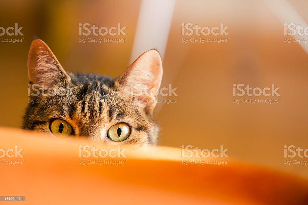 Betreffen können cat – Foto