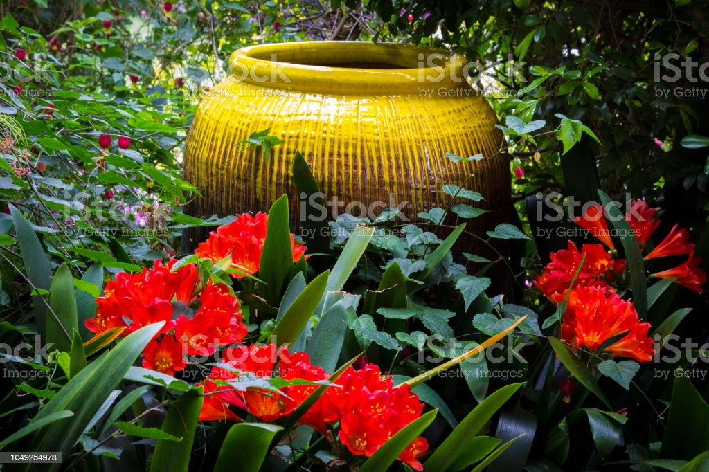Lush backyard garden. stock photo