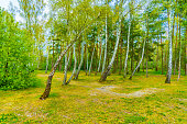Mixed forest in western europe on a sunny spring day. Photo taken in Kaliningrad region, Russia.