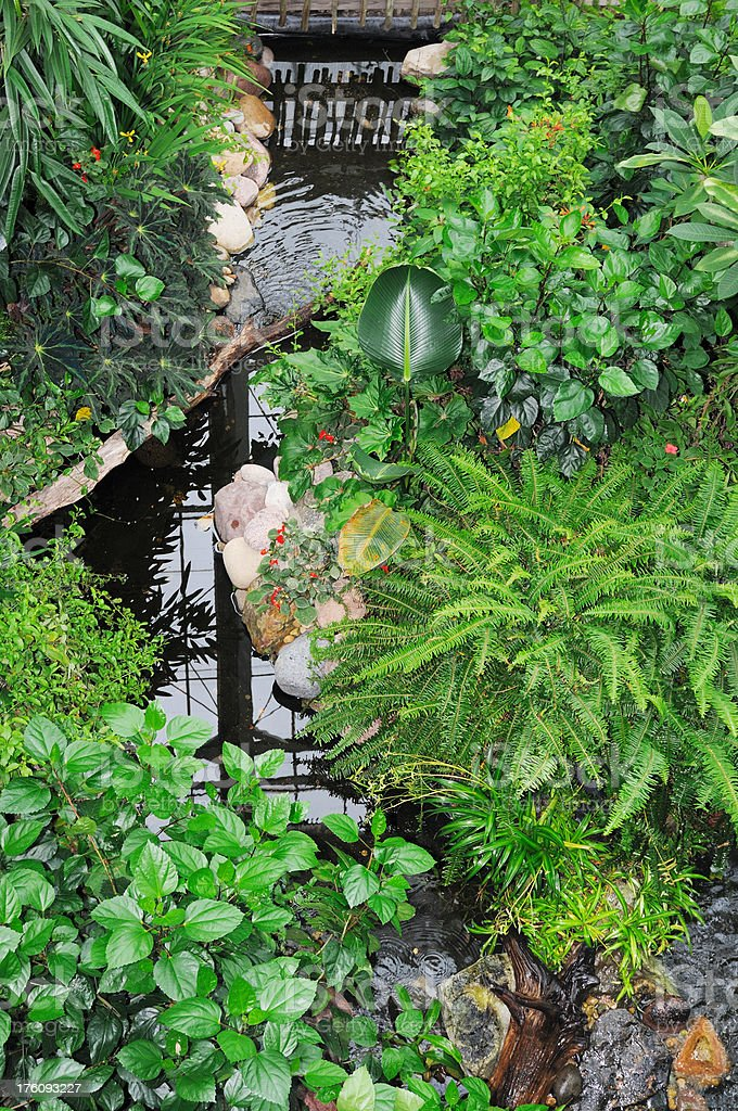 Lush Botanical Garden and Pond stock photo