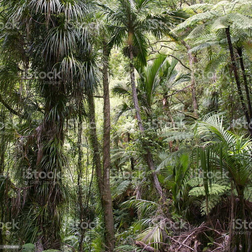 Lush Dense Native New Zealand Flora stock photo
