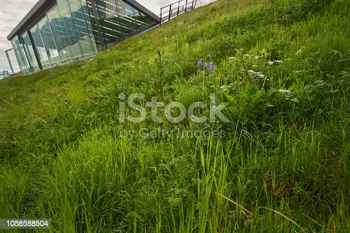 Grass on the Vancouver Convention Center's environmentally friendly, 6 acre green roof.