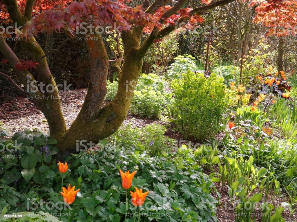 lush english cottage garden royalty-free stock photo