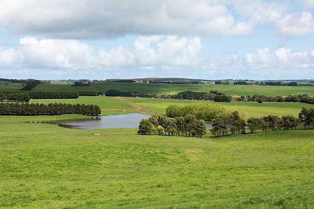 Lush Farmland, Southern Victoria, Australia stock photo