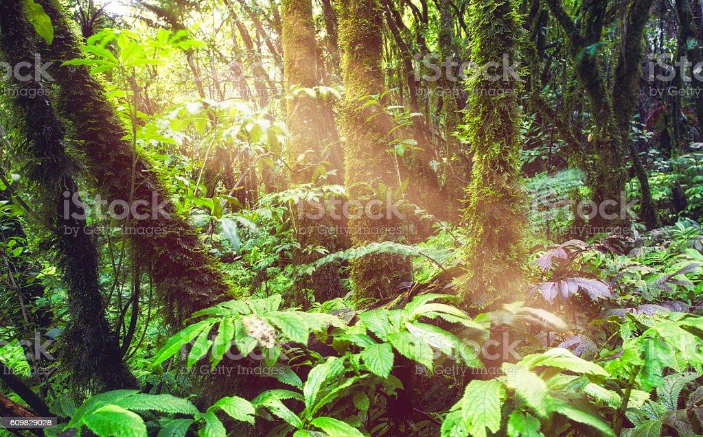 Lush Foilage Of New Zealand. stock photo