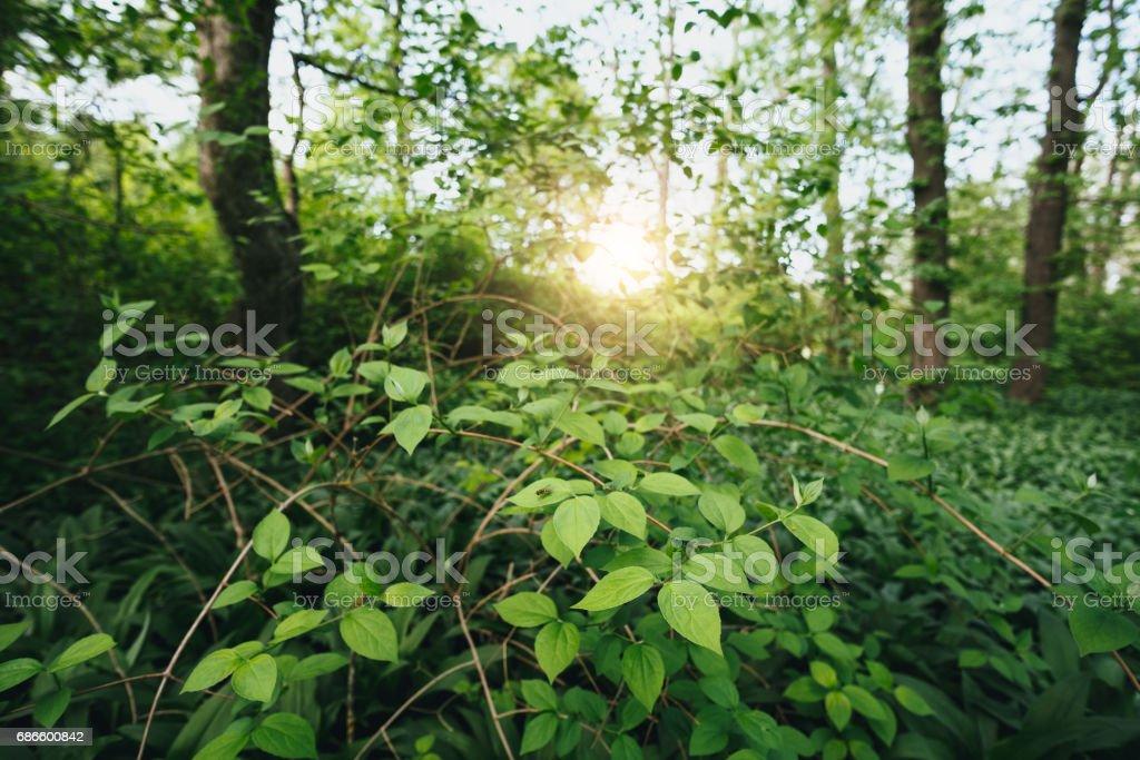 Lush foliage in the forest photo libre de droits