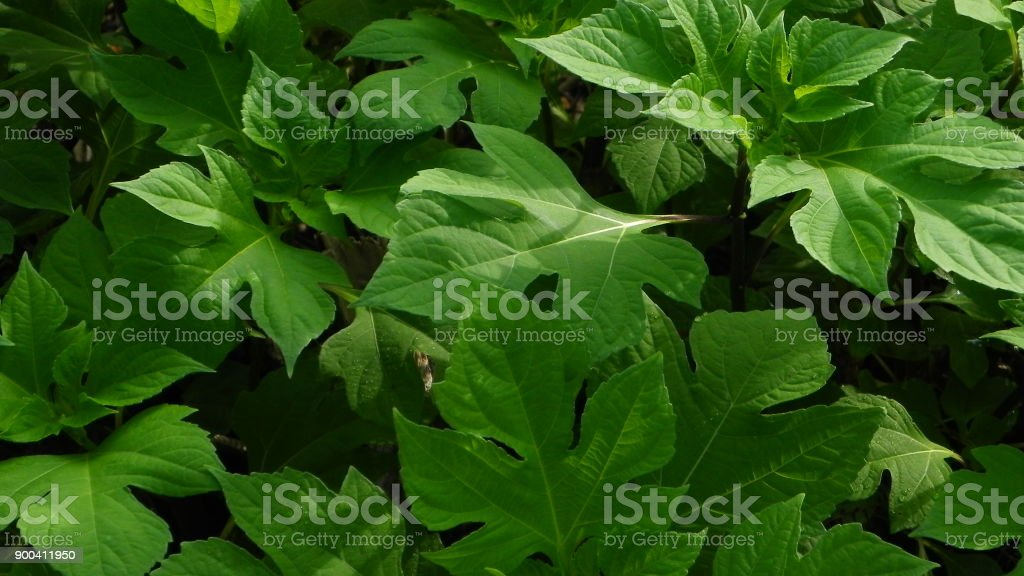 lush foliage stock photo