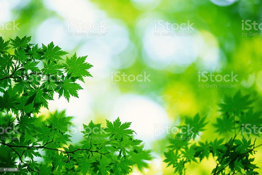 Lush Foliage royalty-free stock photo