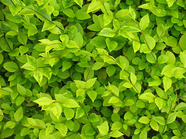 lush foliage - foliate pattern stock photos and pictures
