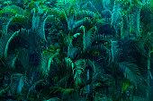 istock lush foliage 941594998