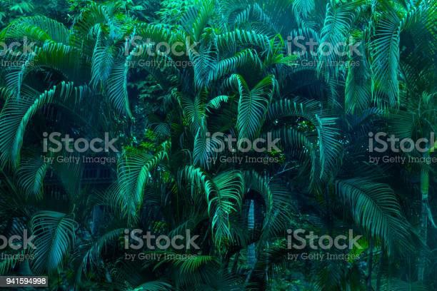 Lush foliage picture id941594998?b=1&k=6&m=941594998&s=612x612&h=iy8wvk3j2yryrxl pkbvqqbcyowcsrbbue ceypelue=