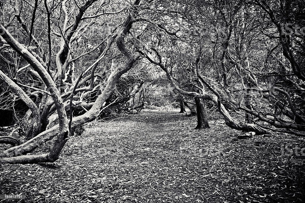 Lush Forest in Black and White royalty-free stock photo