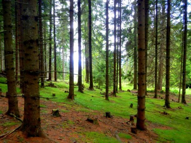 Üppige Wälder im Sommer, großen Bäumen und Sonnenlicht – Foto