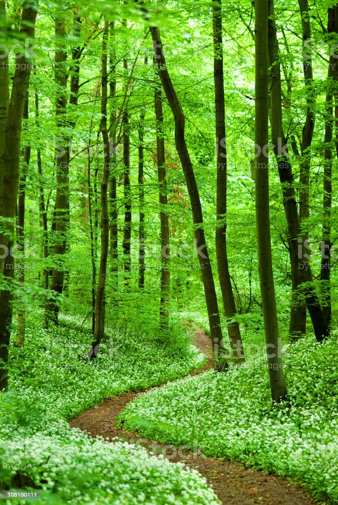 Lush Forest Path royalty-free stock photo
