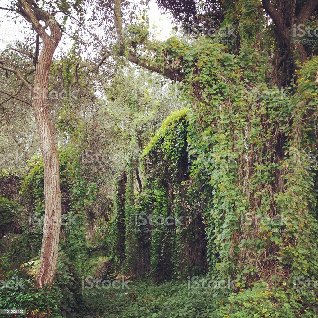 Lush Forest stock photo