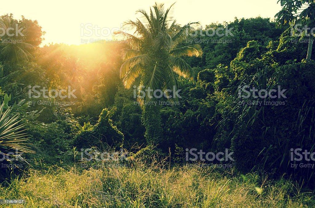lush forest sunrise royalty-free stock photo