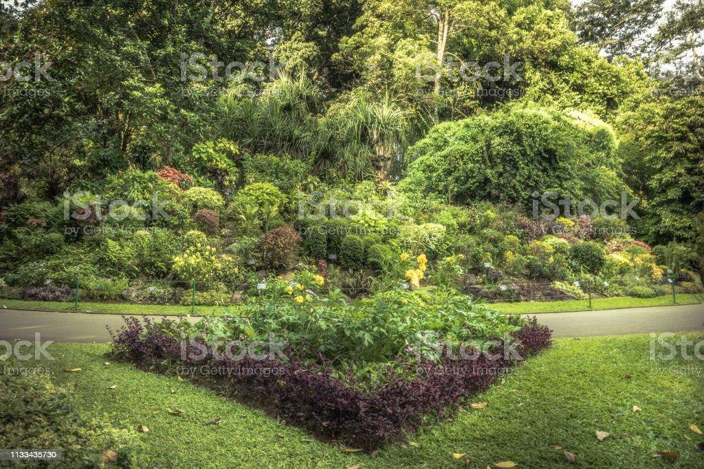 Weelderige tuin bloembed landschap met landschap design in Royal Botanic Garden Peradeniya in Sri Lanka in de buurt Kandy omgeving foto