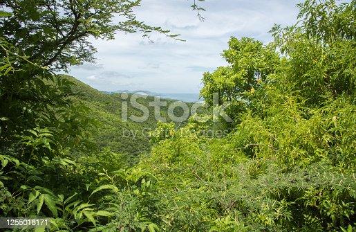 1145102719 istock photo Lush Goat Hill: St. Croix 1255018171