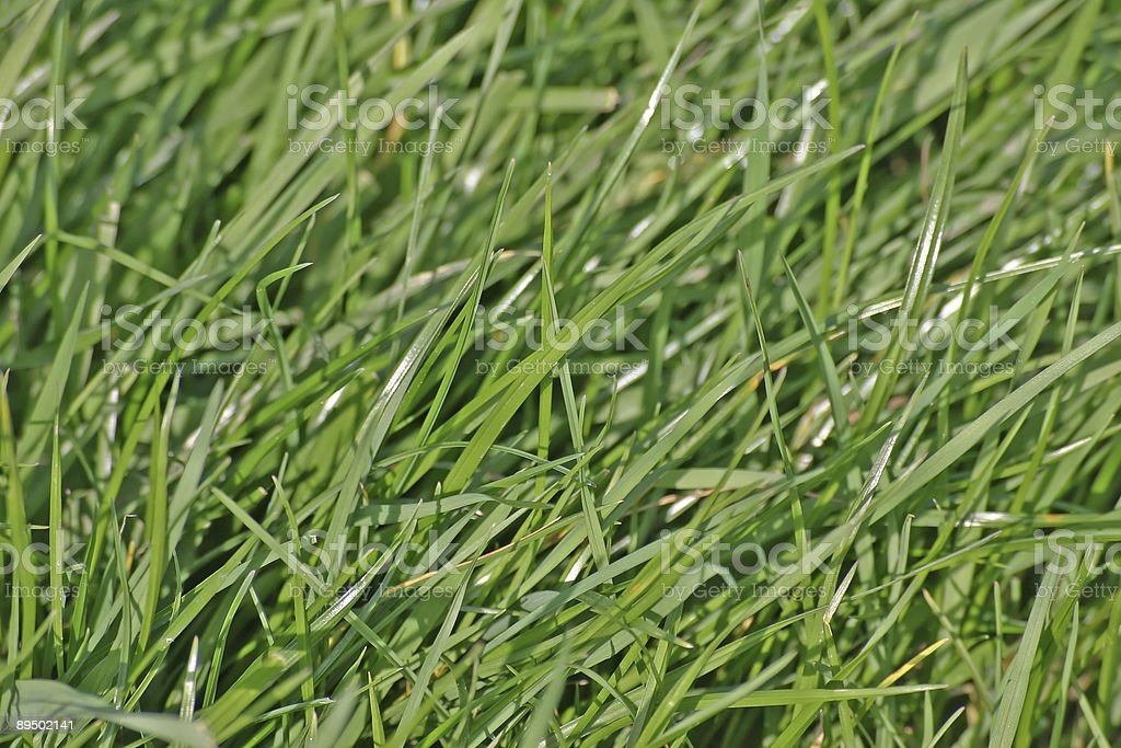 Lush Grass in English Meadow royalty-free stock photo