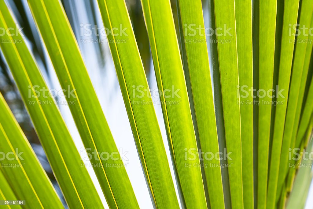Lush green abstract tropical palm leaf background stock photo