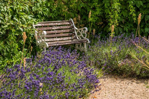 lush green english cottage summer garden stock photo