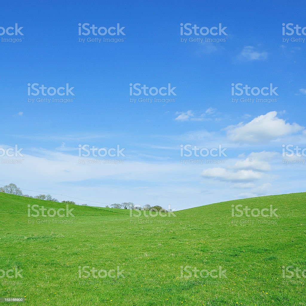 Lush Green Field and Blue Sky Above stock photo