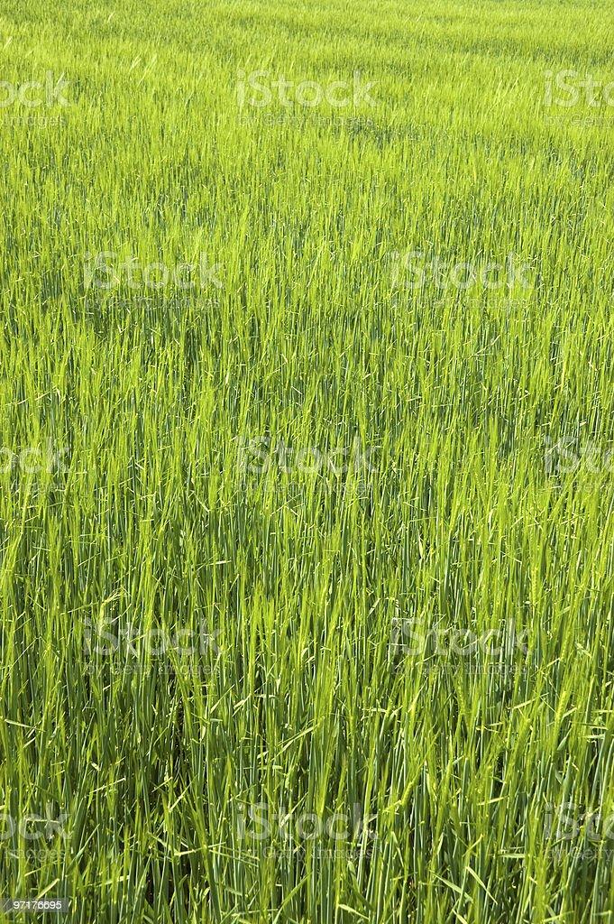 Lush Green Field stock photo