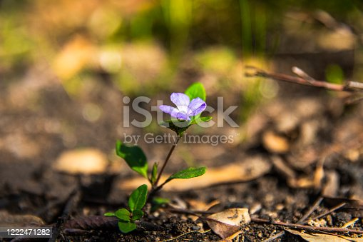 istock Lush green flowering regrowth growing out of ash after forest fire 1222471282