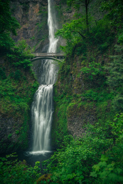 Lush green foliage at Multnomah Falls, Oregon stock photo