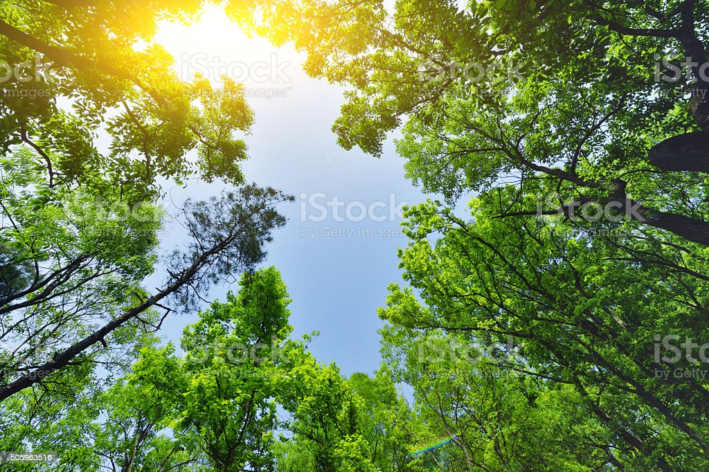 Lush Green Forest in Sunlight stock photo
