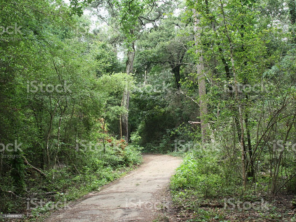 Lush Green Forest Path stock photo