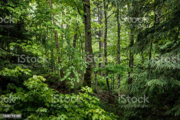Photo of Lush green forest